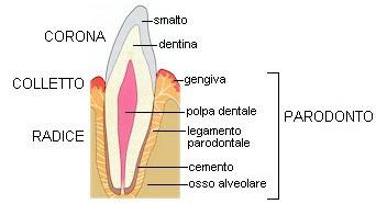 paradonto-csdb-schema