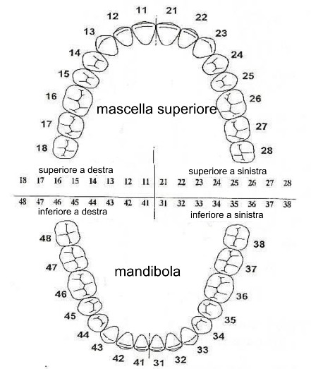 sistema_di_numerazione_dentale_1